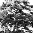 arbre-yr2