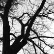 arbre-yr5