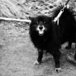 chien-yr5