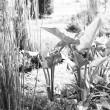 plante-yr1